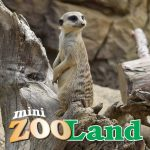 Mini ZOO Land